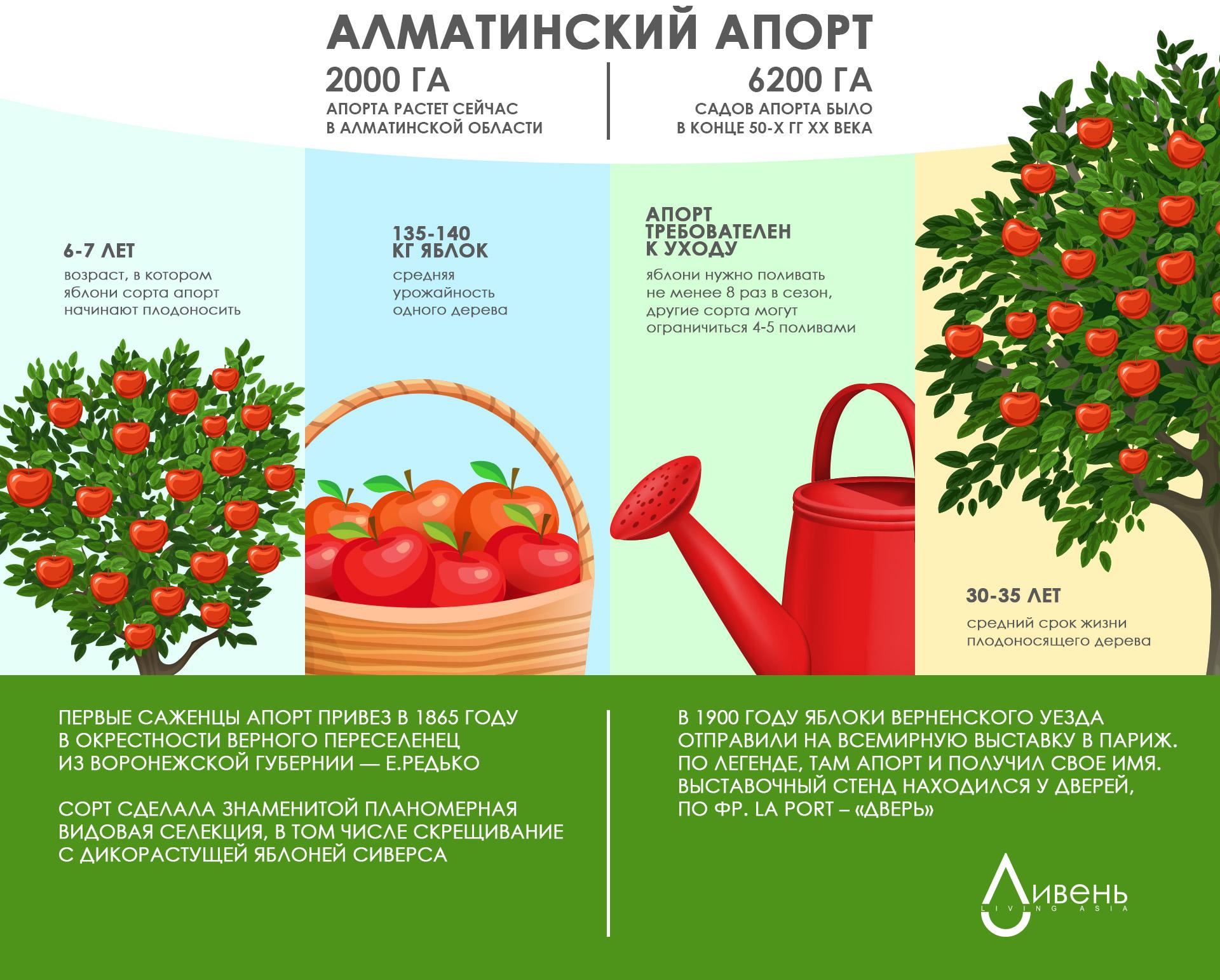 Инфографика: главные цифры и факты об алматинском апорте