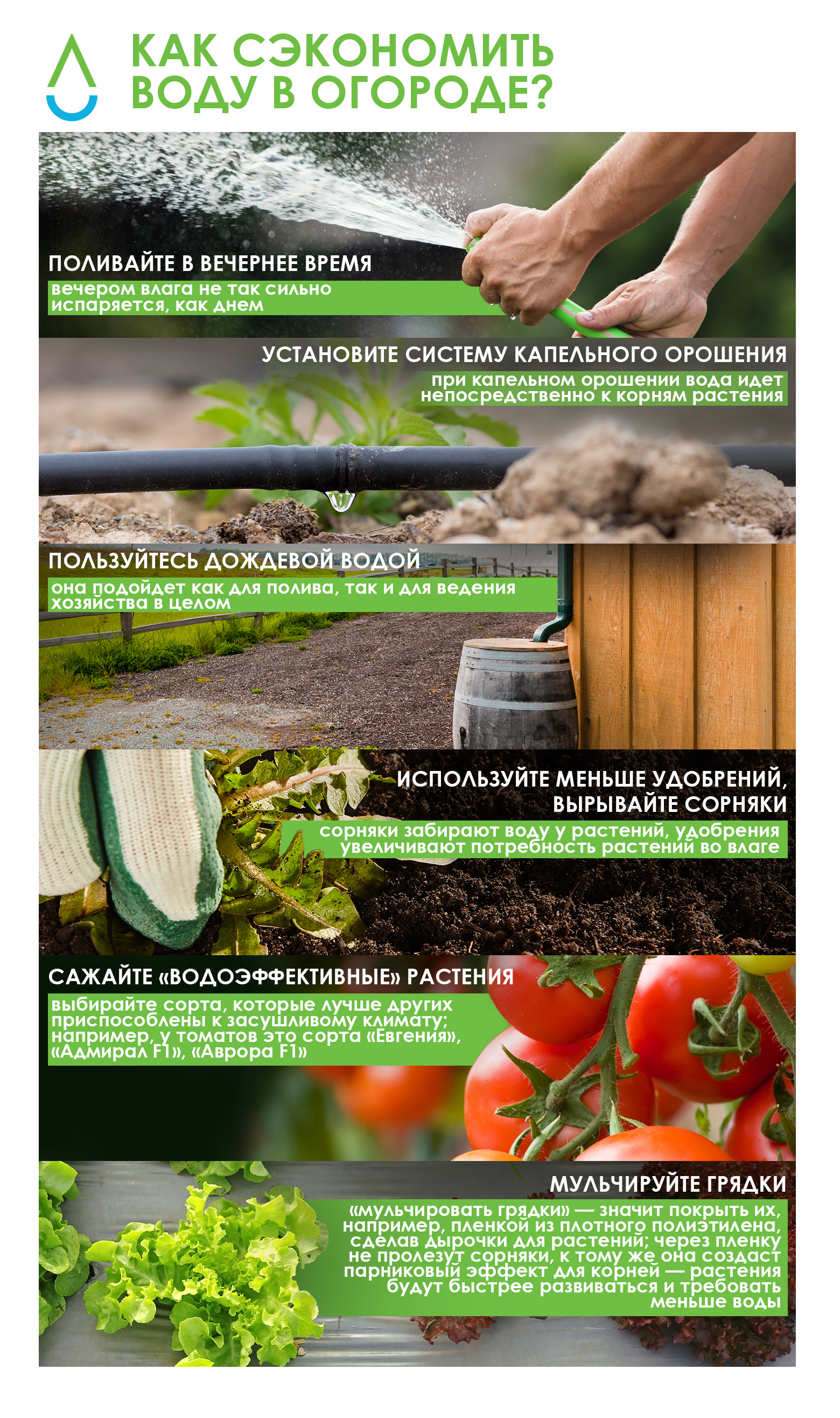 green_how_to-dachas