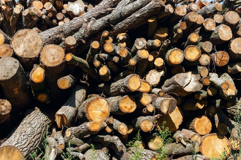 деревья, вырубка деревьев, tree, deforestatation, derevya