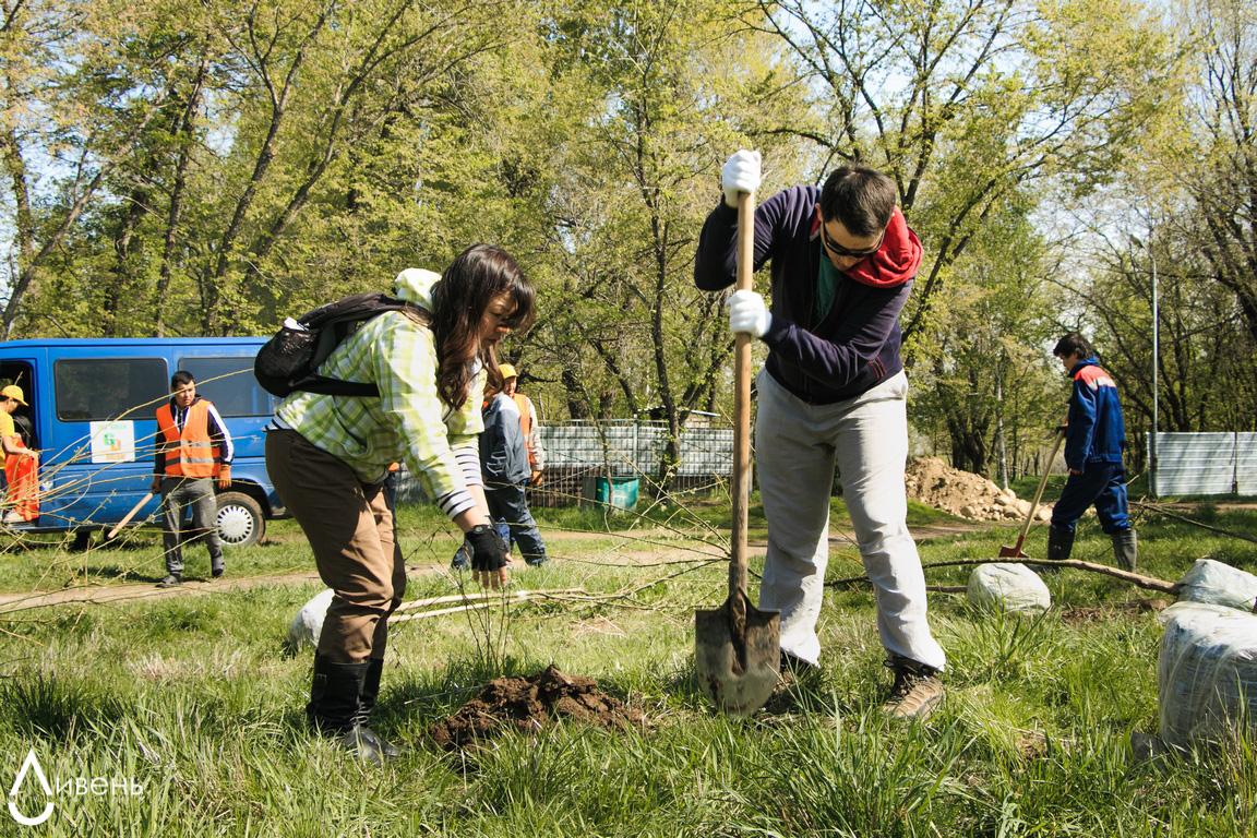 экология деревья Казахстан