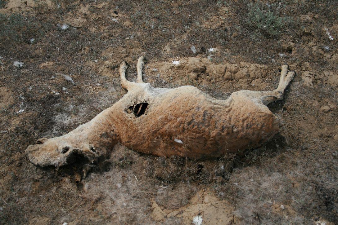браконьерство Казахстан закон