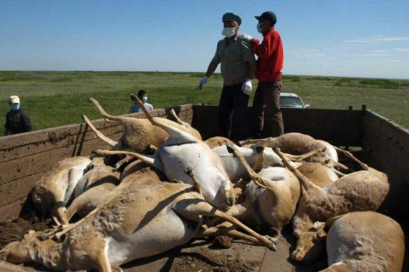 браконьерство Актобе Казахстан охота и рыбалка