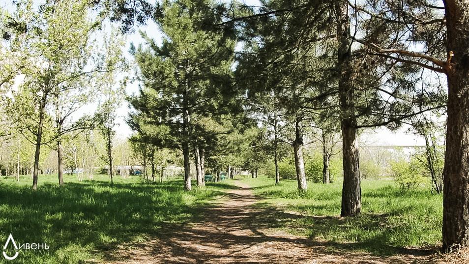 экоактивизм деревья Ташкент