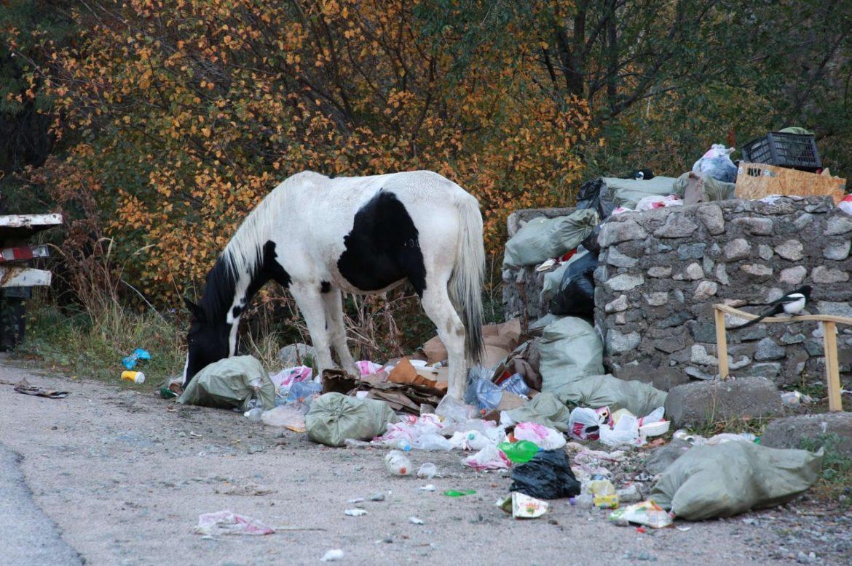 мусор.горы,лошадь