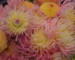 цветы октябрь