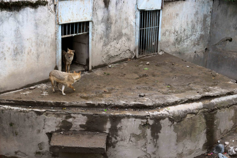 Животные Душанбе
