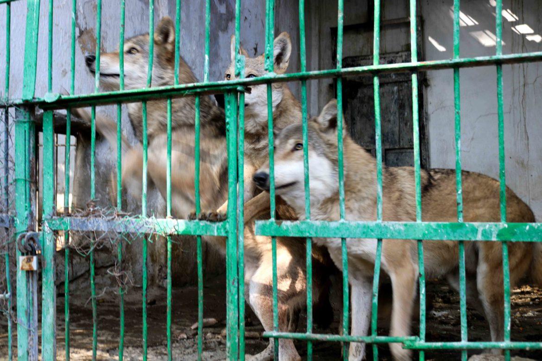 Зоопарк Таджикистана