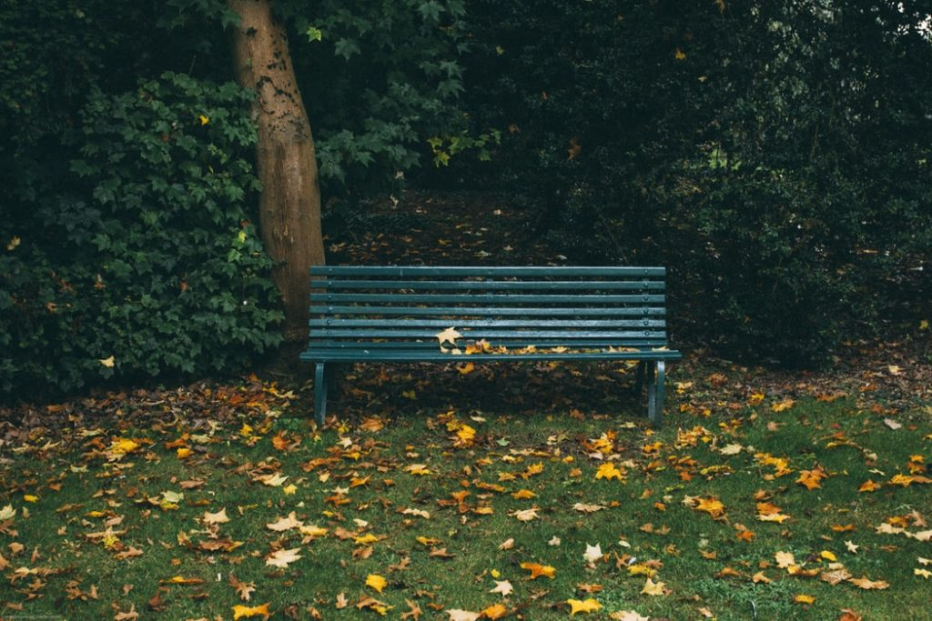 парк,скамейка