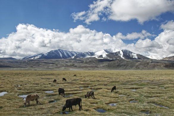 Животные Центральной Азии