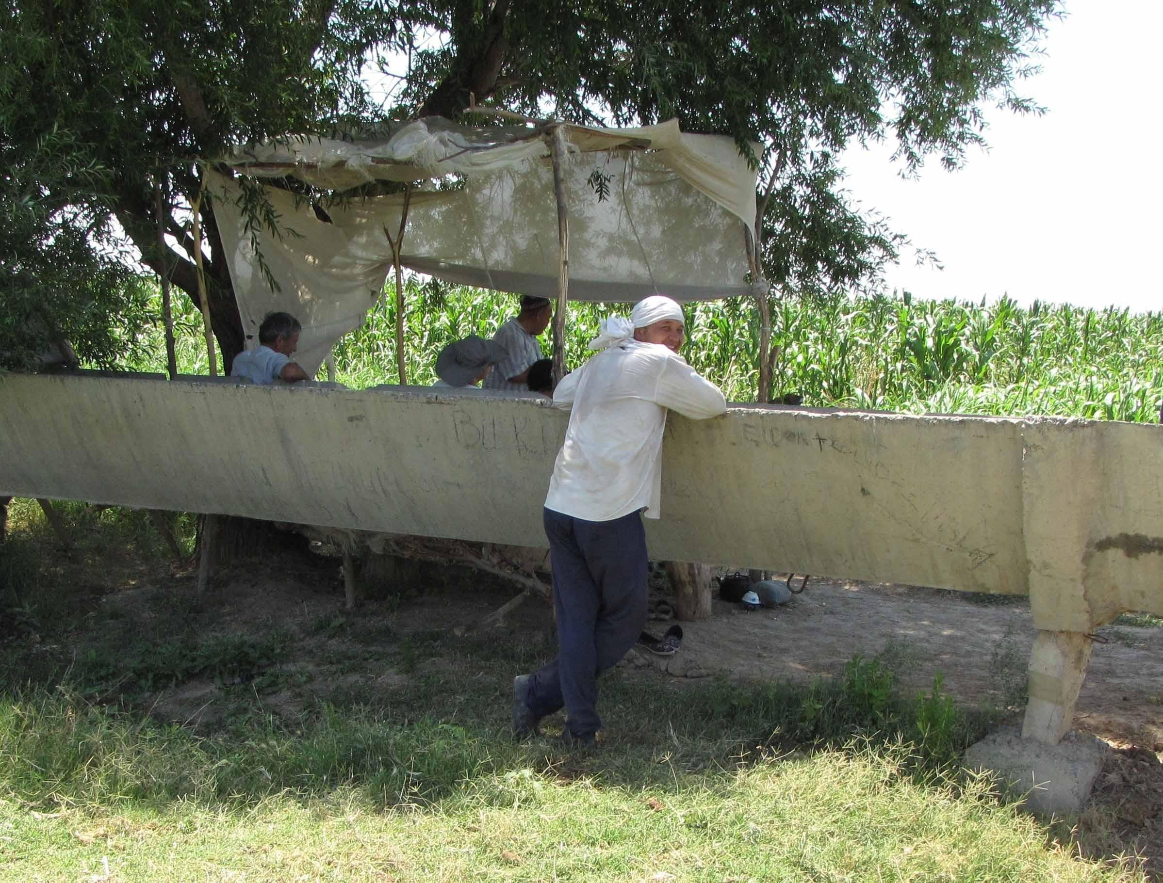 Стратегии развития сельского хозяйства