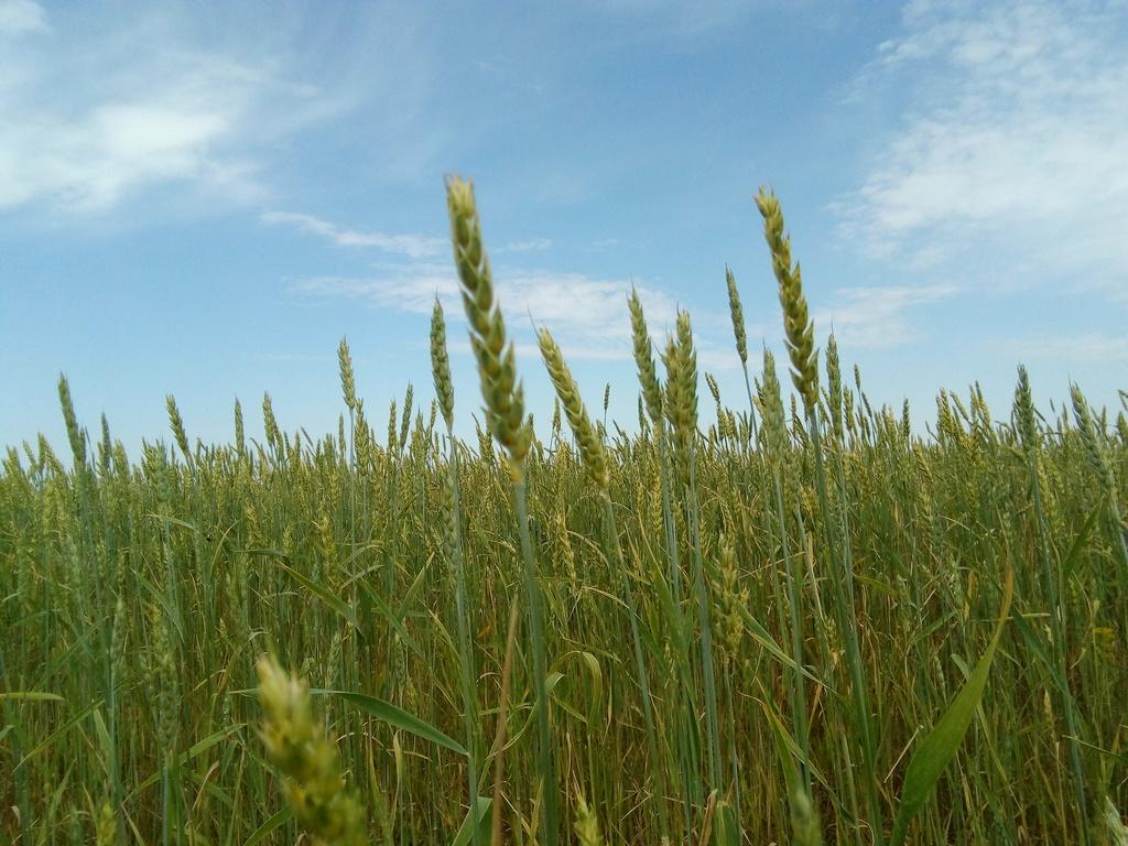 Прогноз урожайности