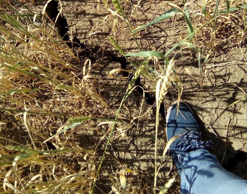 Точность прогноза урожайности