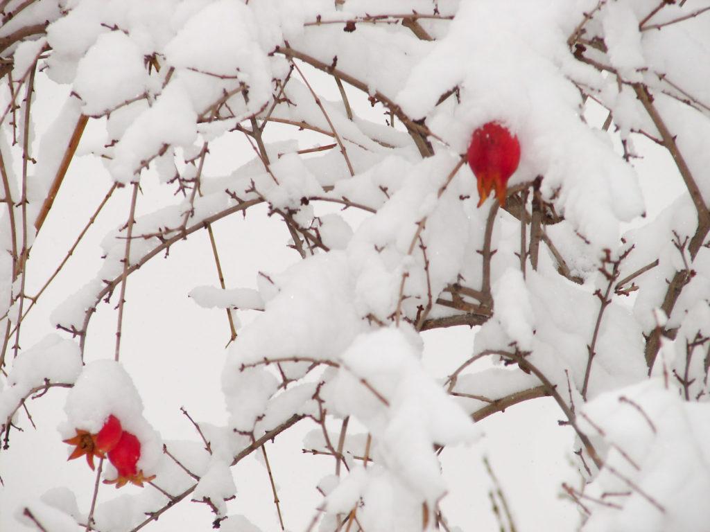 куст в снегу