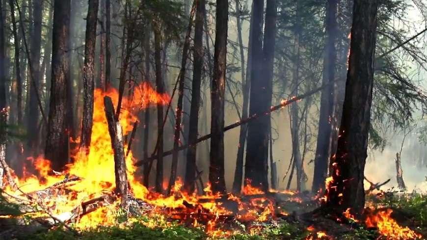 Пожар, охвативший планету, заставляет задуматься