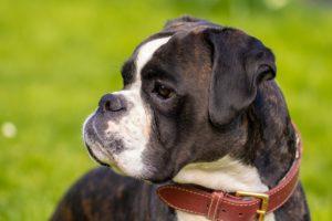 Международный день собаки-поводыря