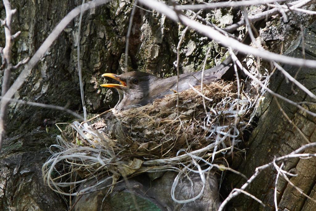 Гнездо. Фото: Дина Джулаева