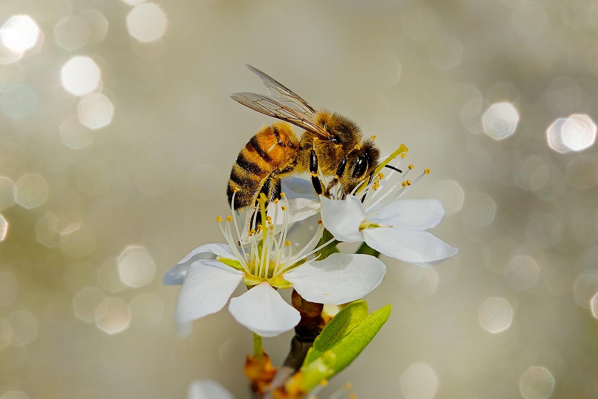 Всемирный день пчёл