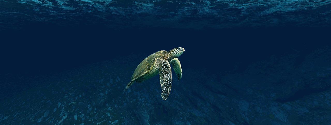 черепах