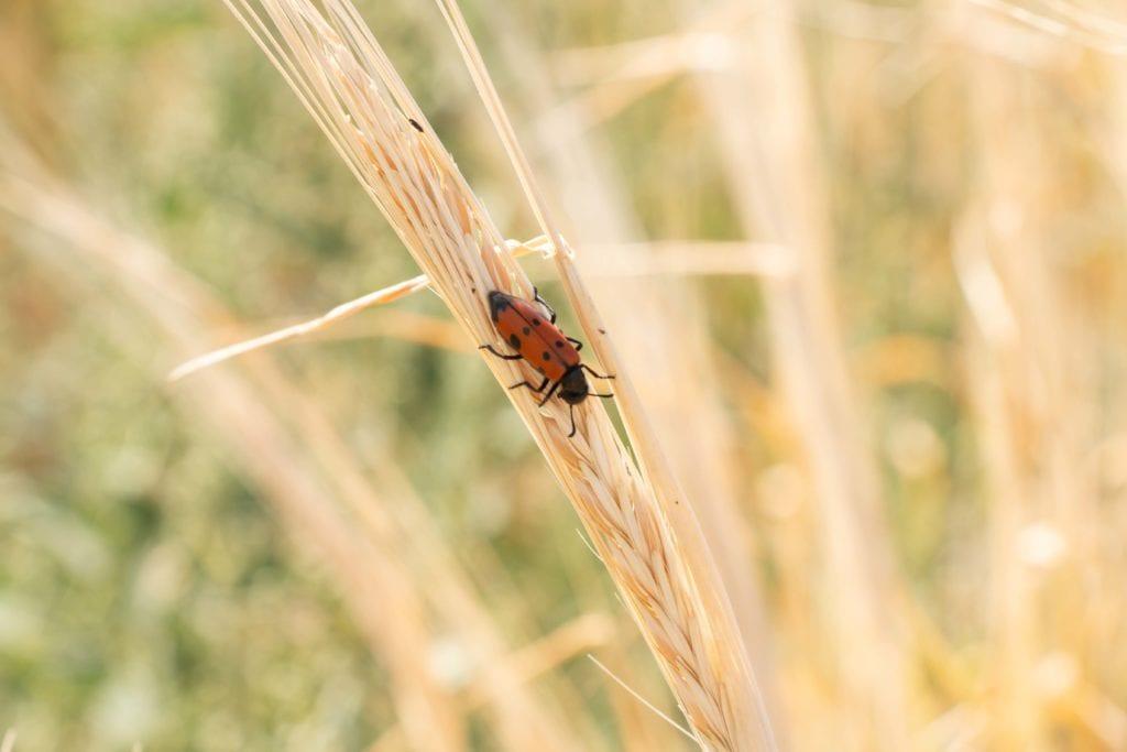 Степное насекомое