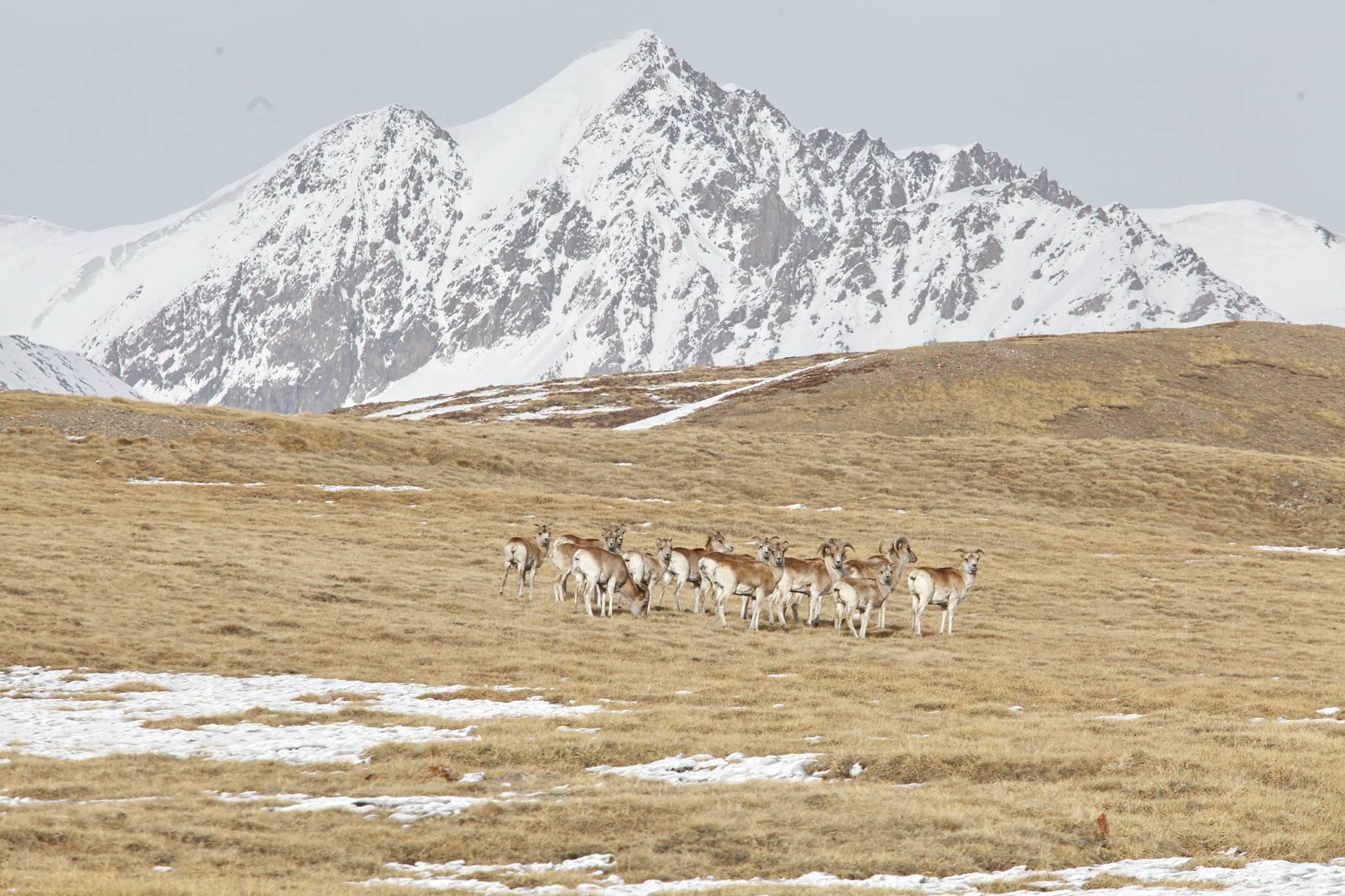 Проблема исчезновения видов - острый вопрос сейчас