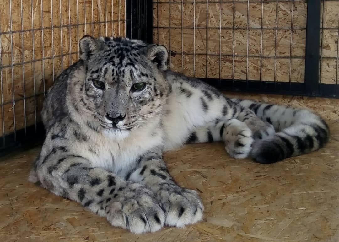 Кыргызстанский общественный фонд «БУГУ-ЭНЕ» занимается спасением животных