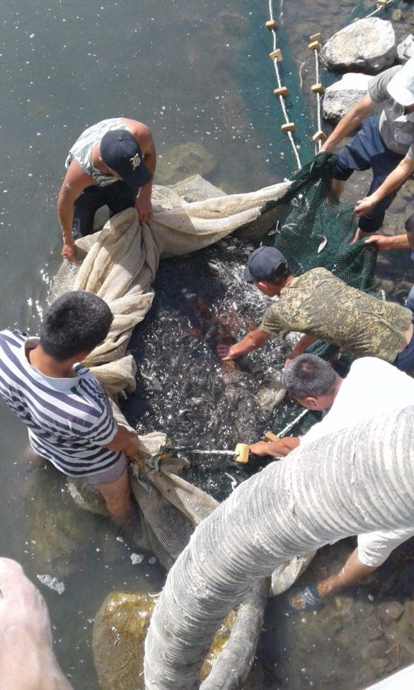 Спасение рыбы на Аральском море