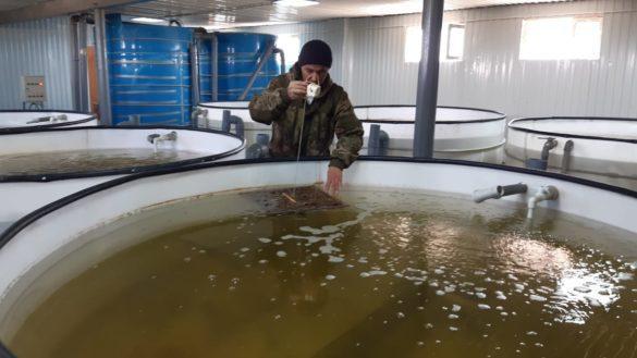 Инкубационнный цех для выращивания рыбы