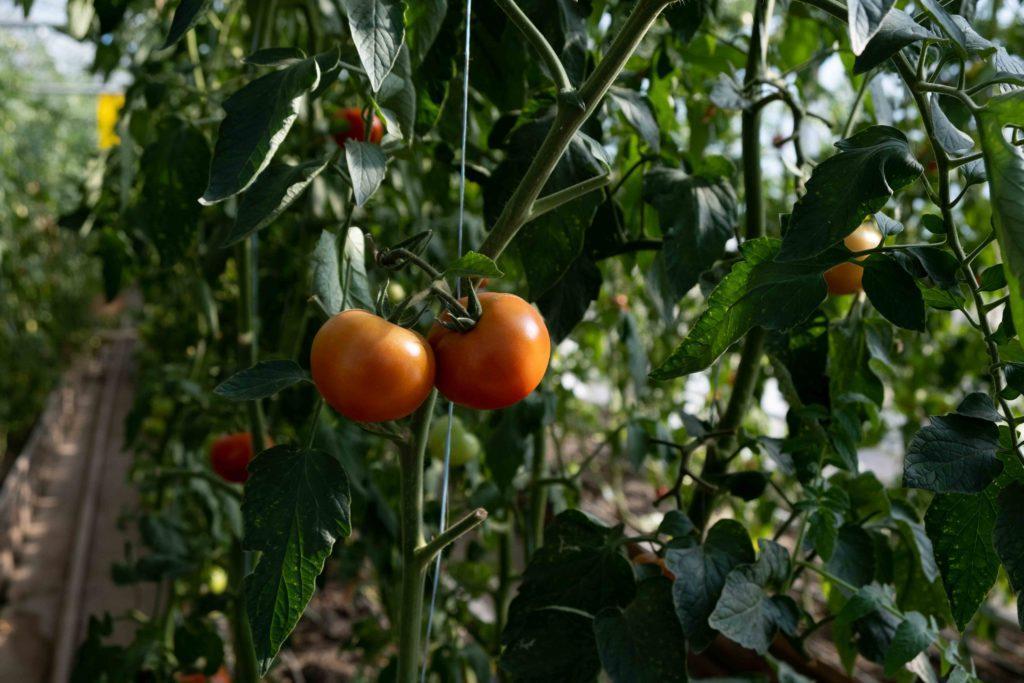 Туркестанский агроколледж
