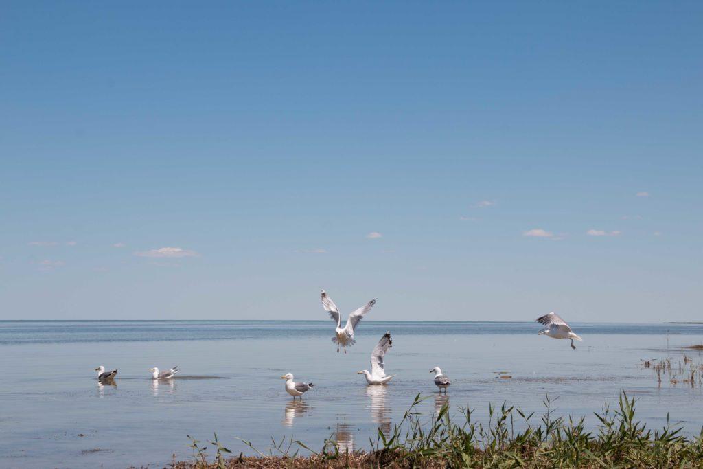 Птицы Аральского региона