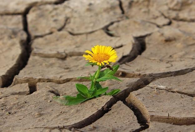 Нерациональное использование природных ресурсов